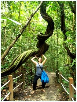 Bukit Timah Nature Reserve (my roommate Grace)