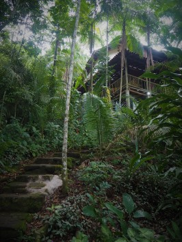 the tree house hostel