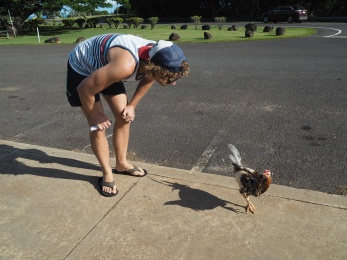 Callum saying hello to a chicken