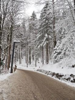 The slushy road up to Neuschwanstein